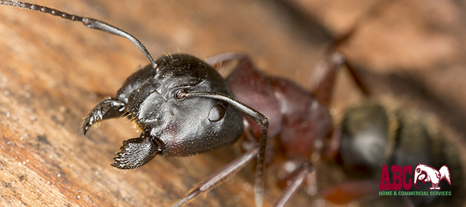 "Carpenter Ant Awareness Week — 3 Signs and 4 Prevention Tips"" /></a></p> <p><a href="