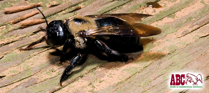 "Help! I Have Carpenter Bees – Warning Signs & Solutions"" /></a></p> <p><a href="
