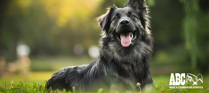 "Keep Pests Off Pets During the Dog Days of Summer"" /></a></p> <p><a href="
