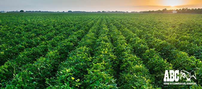 "What Are Herbicides? Herbicide Pros & Cons"" /></a></p> <p><a href="